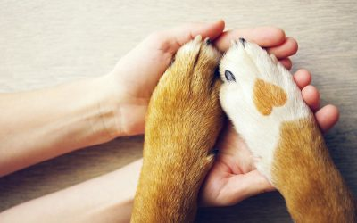 Pets Are Family: Celebrating National Love Your Pet Day