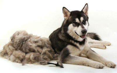 5 Easy Ways to Deal With Your Shedding Pet Fur