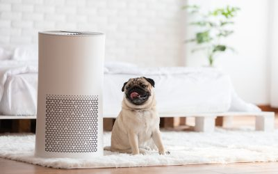 Air Purifier For Pets: Are They Safe?